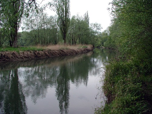 Der Altenrhein bei Höchst