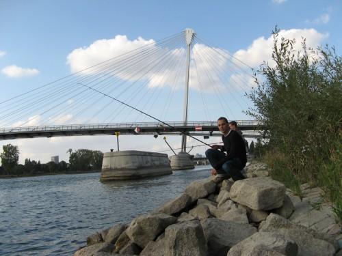 Rapfen an der Europa Brücke