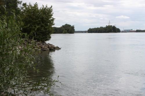 Rapfenangeln am Rhein