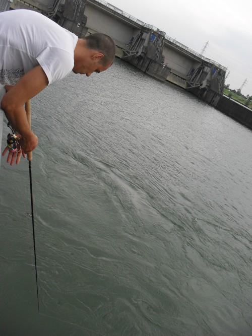 Rapfen am Rhein angeln